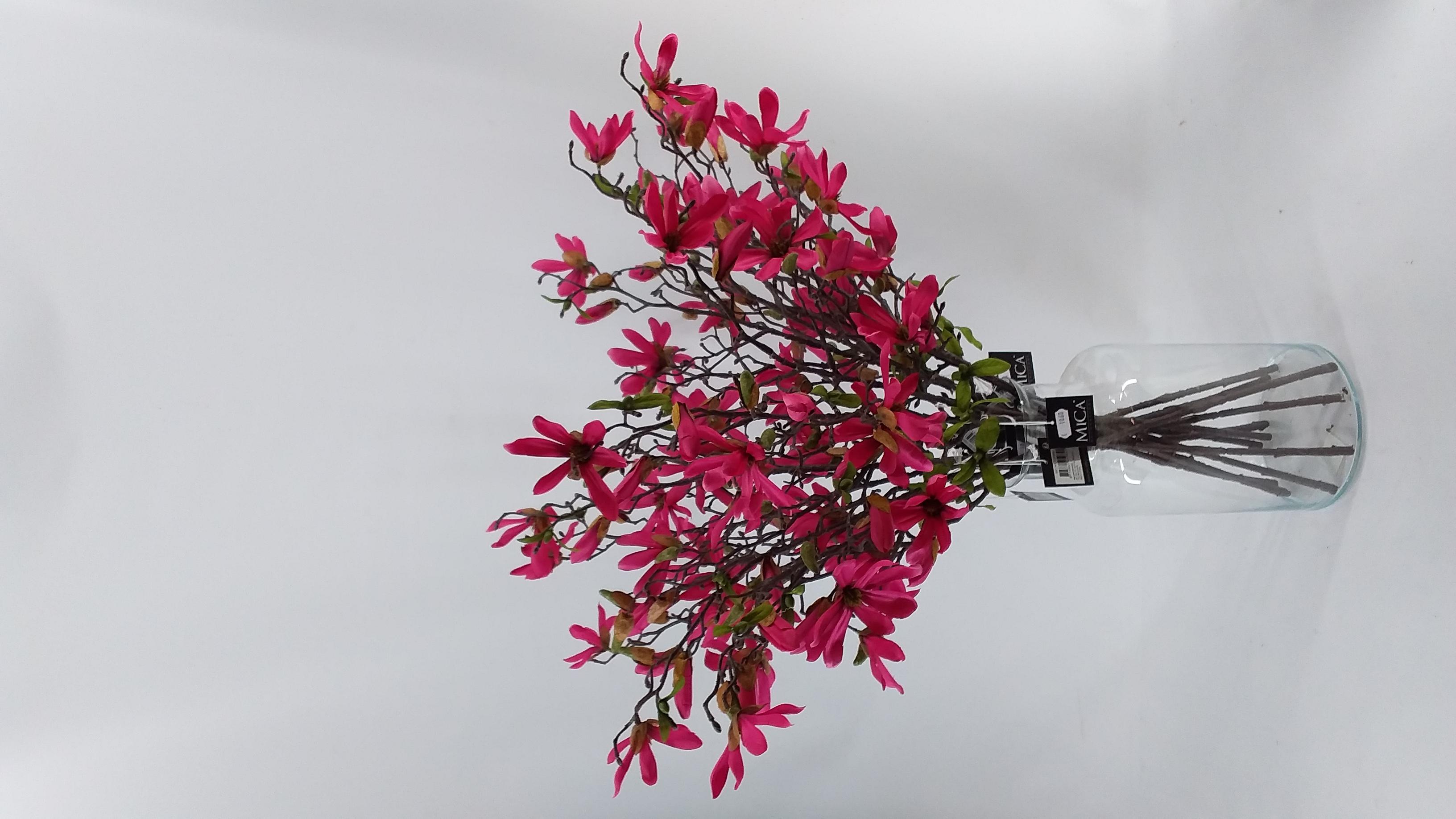 Magnolia d.roze