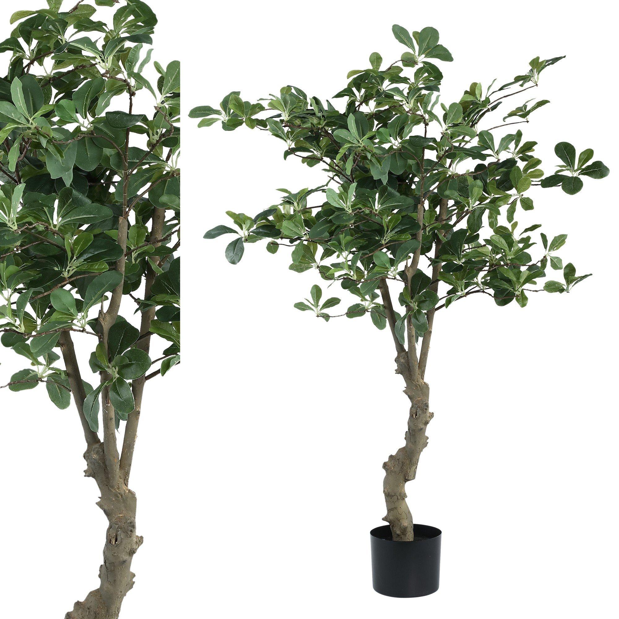 Tree Olive leavestrunk in pot L