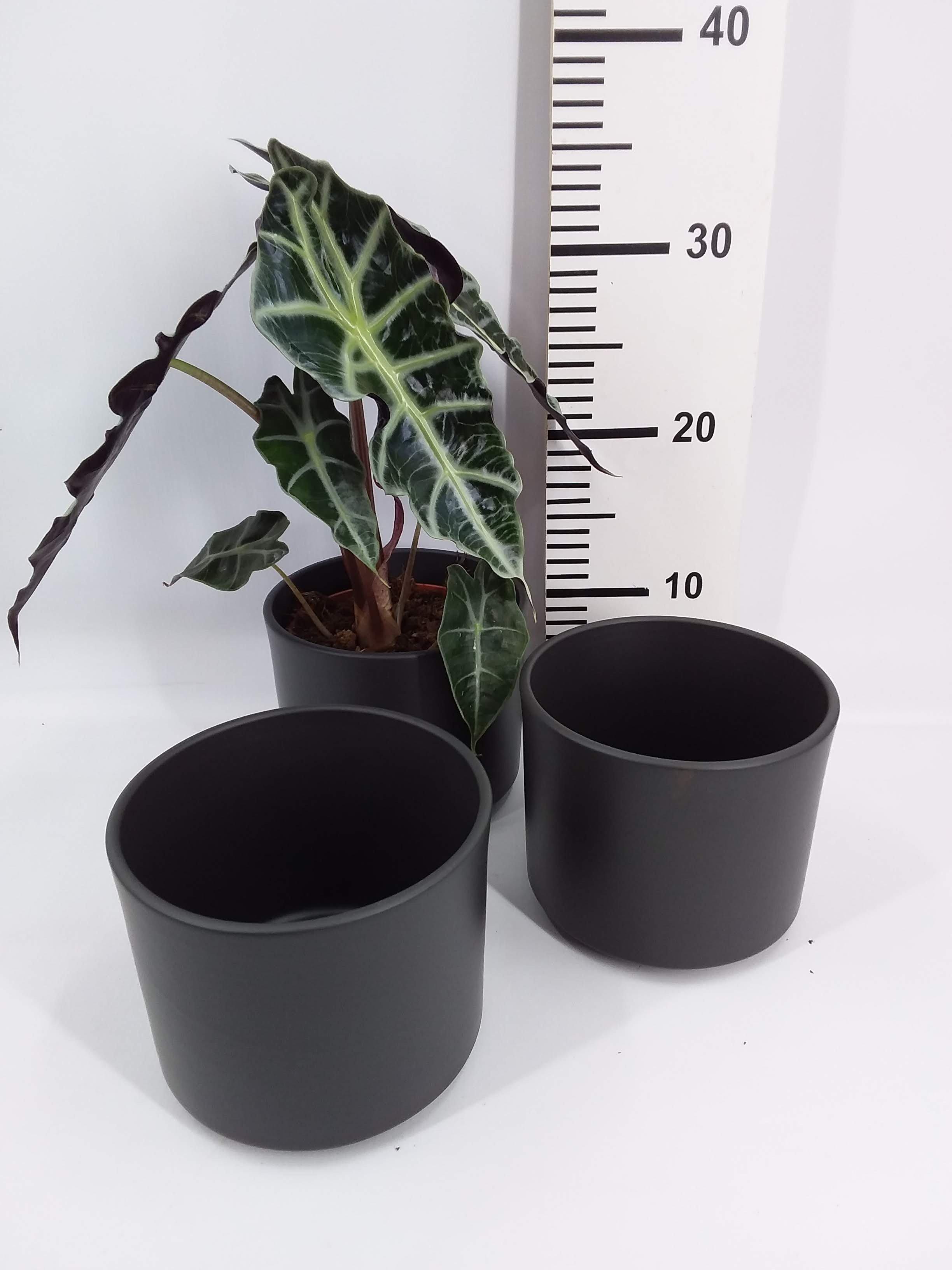 Standaardpot zwart medium 10