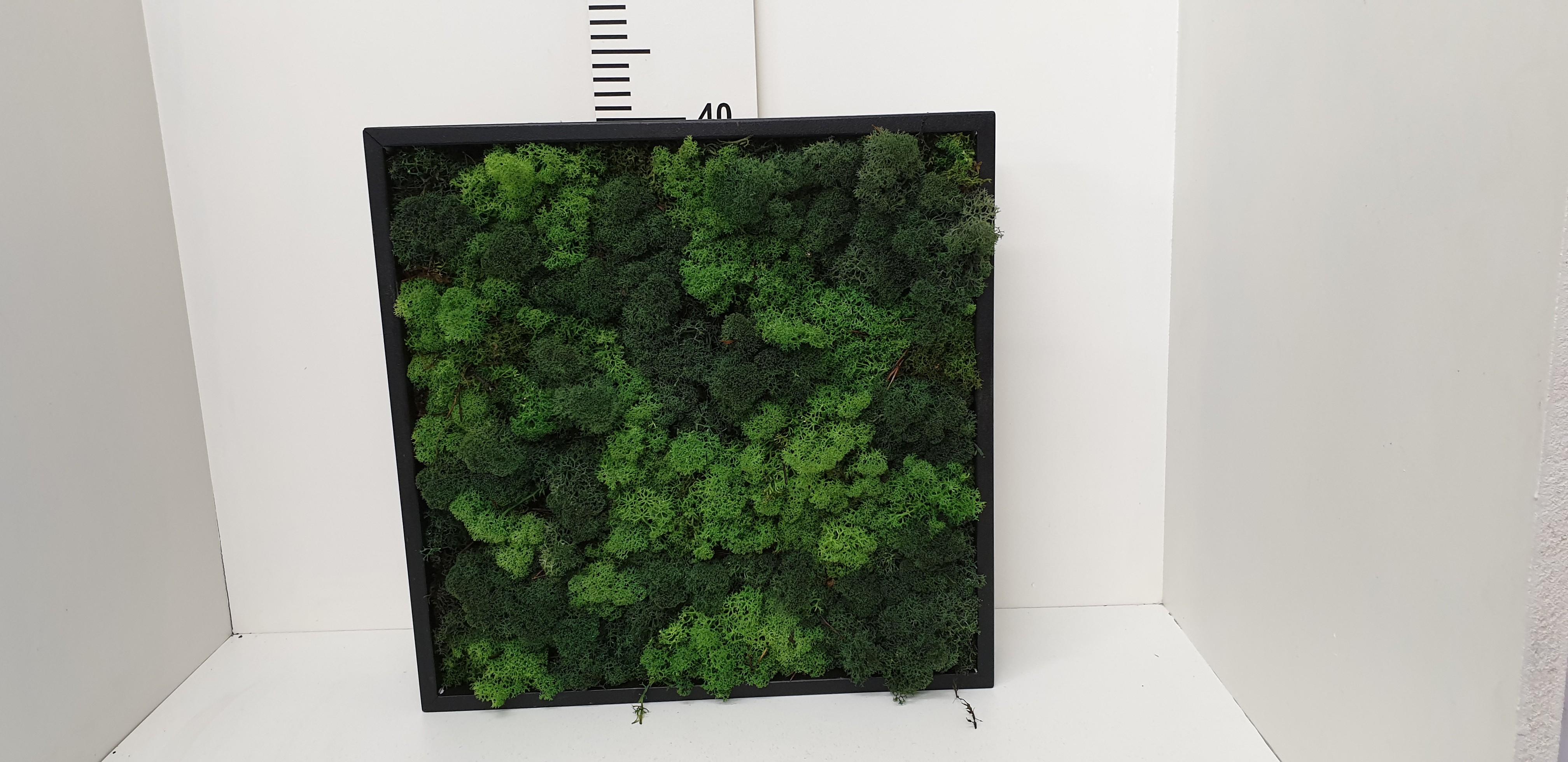 Moskader 40*40cm- black forrest green