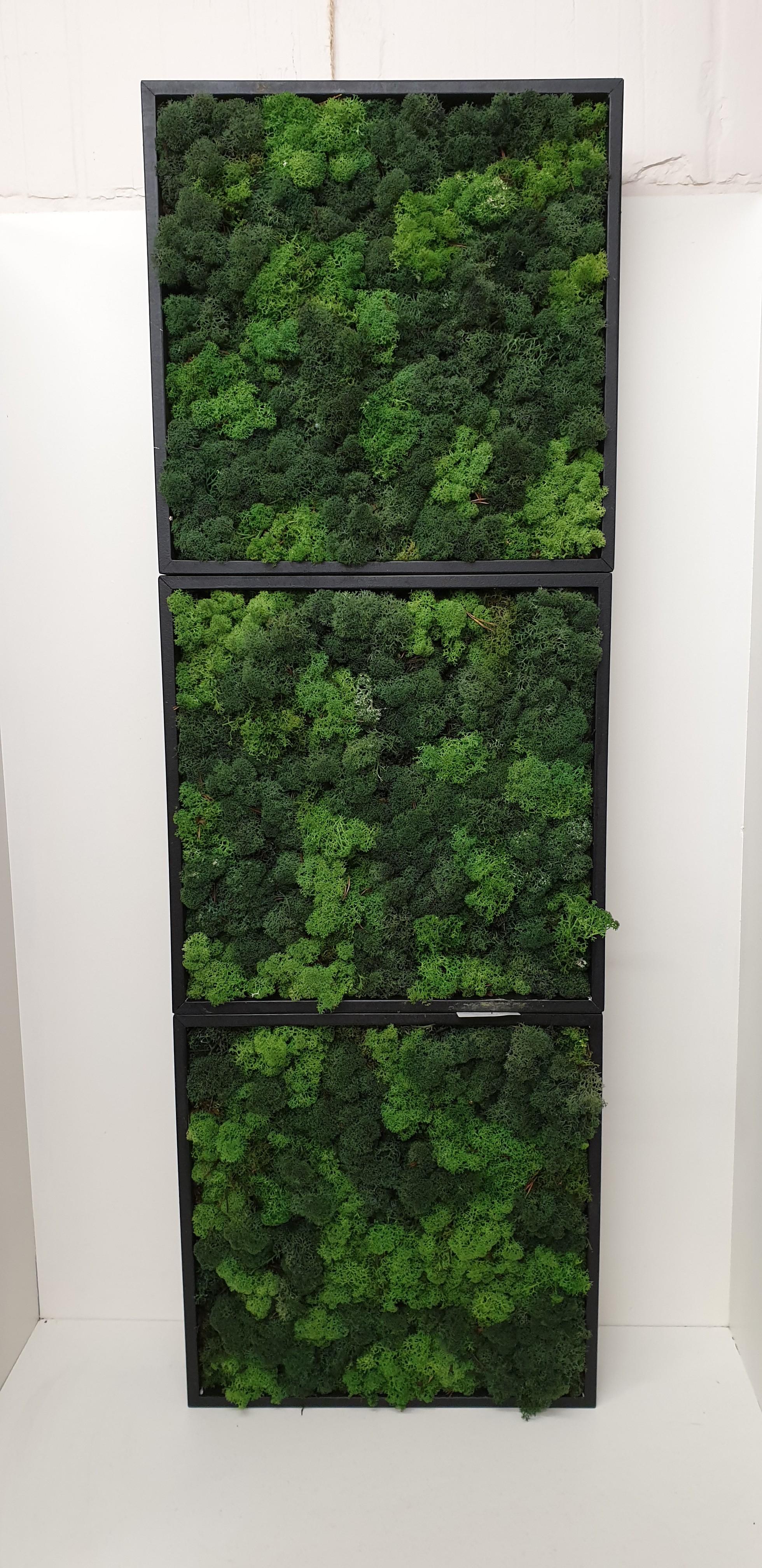Moskader 3 modules van40*40cm- black forrest green