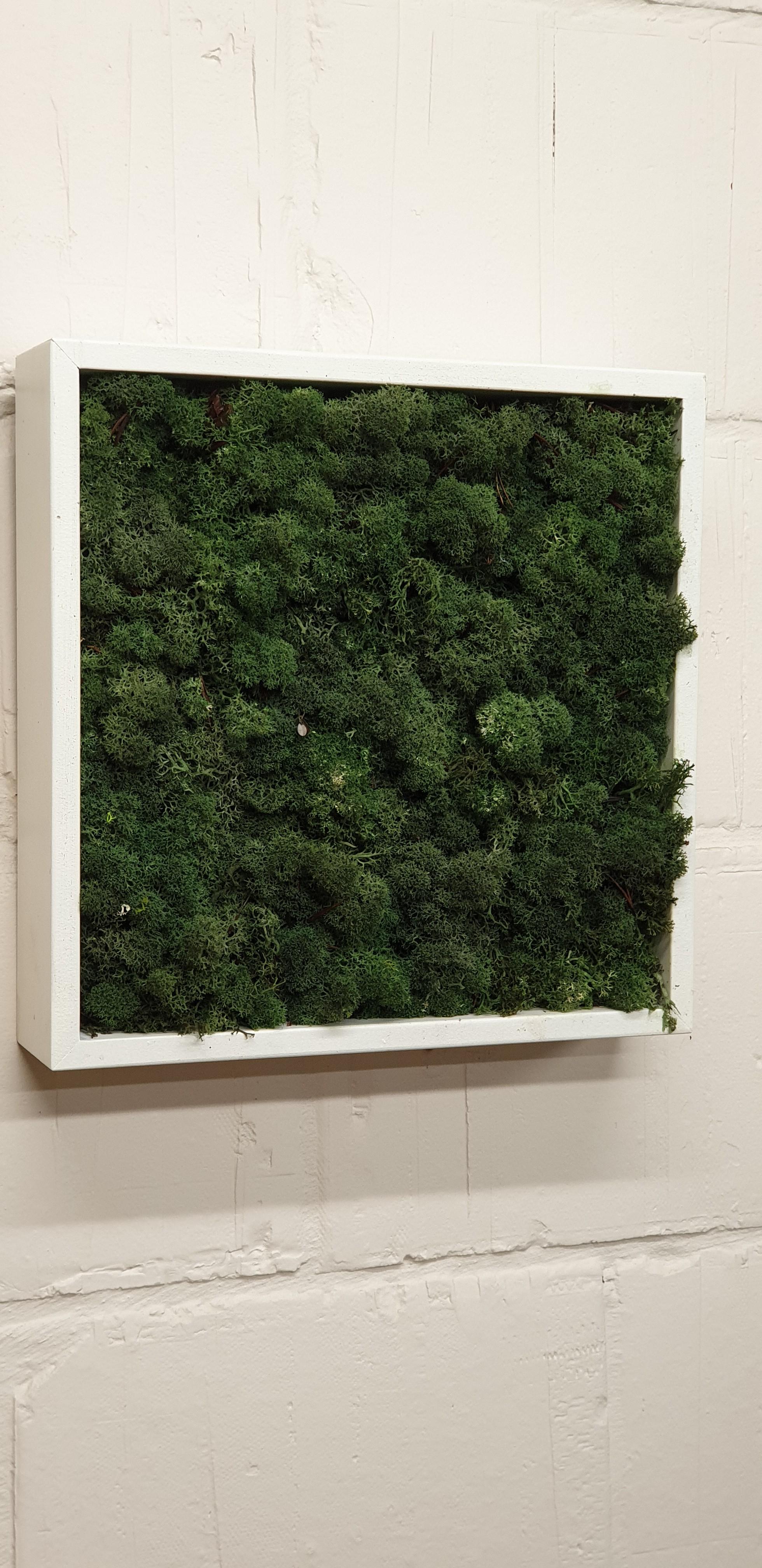 Moskader 30*30cm - forrest green