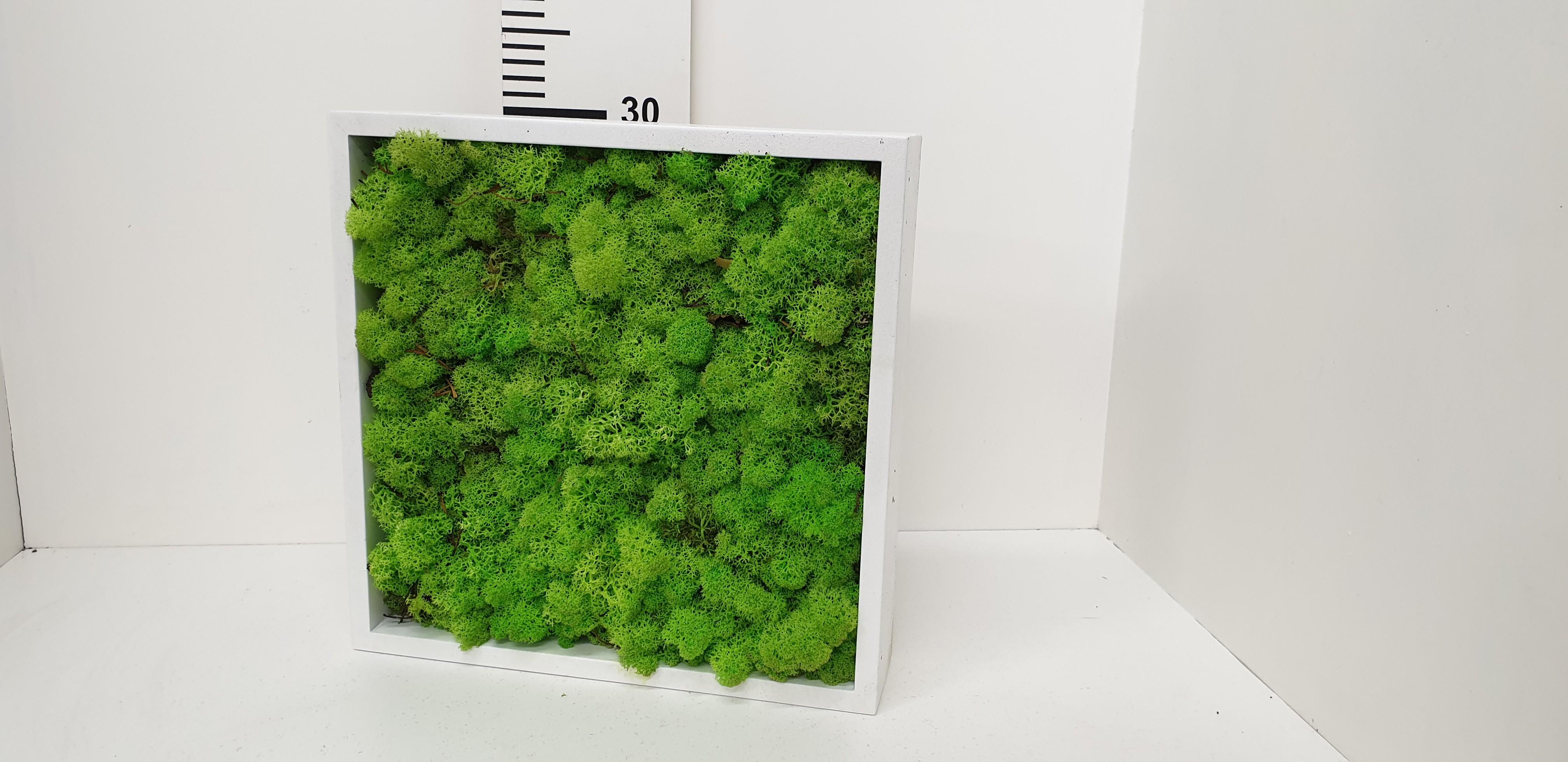 Moskader 30*30cm - moss green