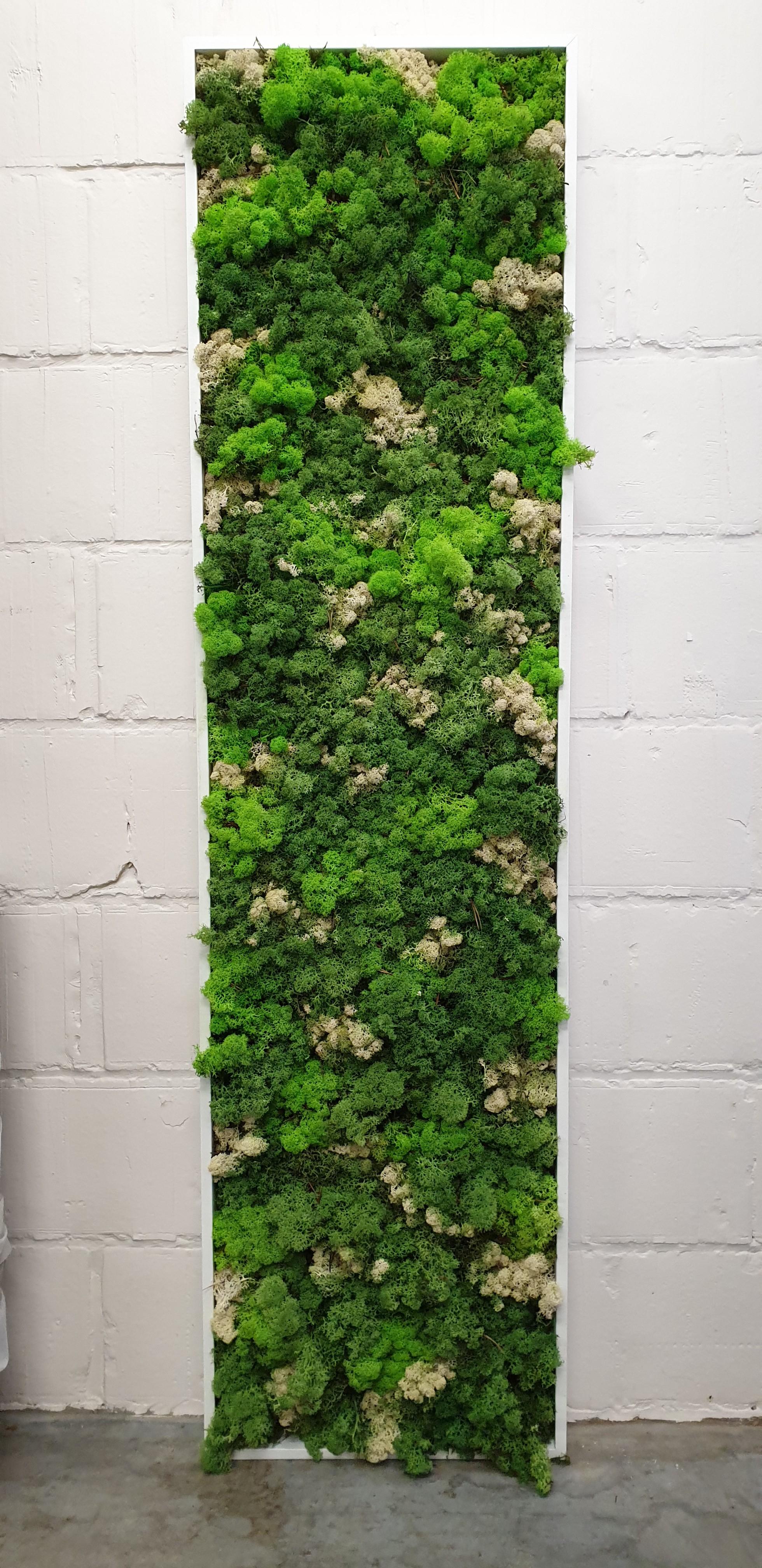 Moskader 150*40cm - mixed greens
